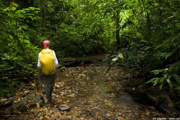 Caminando por un río de la Reserva Itapoa, Esmeraldas, Ecuador. Walking through a river in Itapoa Reserve, Esmeraldas, Ecuador