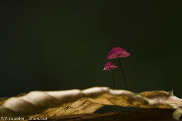 Hongos en el Parque Nacional Yasuní. Mushrooms in Yasuni National Park, Ecuador.