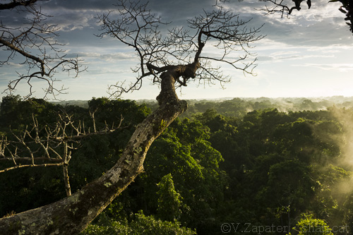 Canopy view of the Amazonian rainforest from a ceibo tree in the late afternoon, Napo Wildlife Center, Yasuni National Park (Orellana, Ecuador). Vista del dosel arbóreo de la selva amazónica desde un ceibo al atardecer, Napo Wildlife Center, Parque Nacional Yasuní (Orellana, Ecuador).